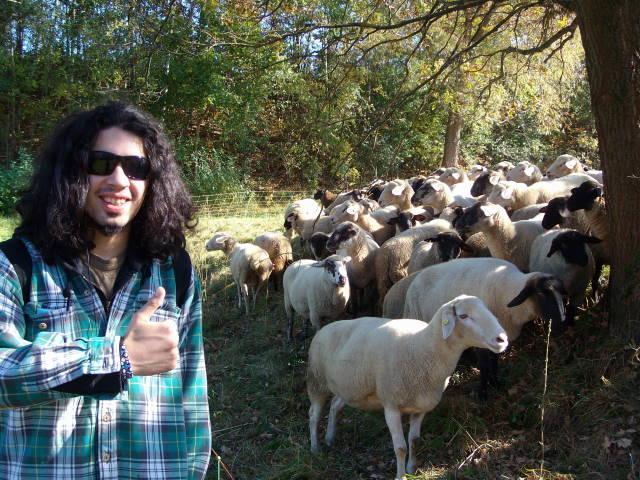 Nachbar mit Schafen 2