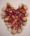 Herz aus Muscheln und Rosenblättern