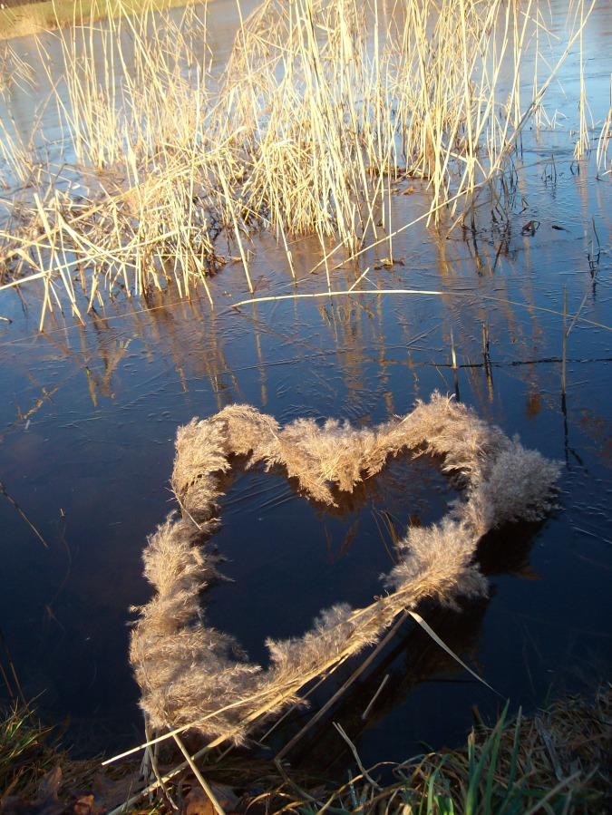 Herz aus Schilff auf Eis und Wasser